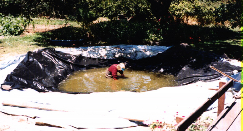 Index Of Pond Pictures